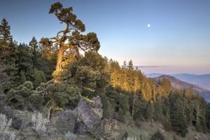 ancient-junipers-in-cascade-siskiyou-national-mon